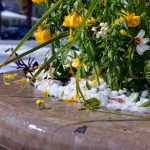 Plants in a pot on Mountain Avenue were pummeled by a severe hail storm that quickly arrived Monday afternoon.  John Gardner/ The Surveyor