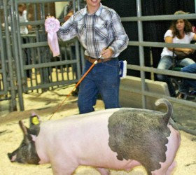 Kelden Cook shows off his ribbon and one of his three pigs at the Larimer County Junior Livestock Show at this year's Larimer County Fair. Kelden received two second-place market swine, in the heavy and medium weight divisions, and a first place in the market swine light weight division. His first-place pig went on to receive reserve champion in the light-market division. And that was a pretty cool way to end the livestock show this year. Becky Justice-Hemmann / The Surveyor
